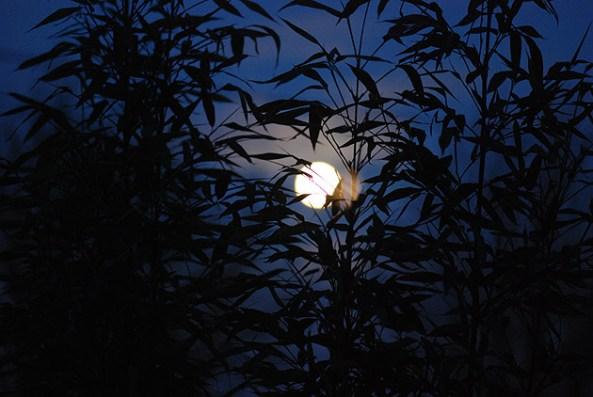 van mau em hey viet mot doan van ta lai canh trang sang dep que em Em hãy viết một đoạn văn tả lại cảnh đêm trăng sáng đẹp ở quê em