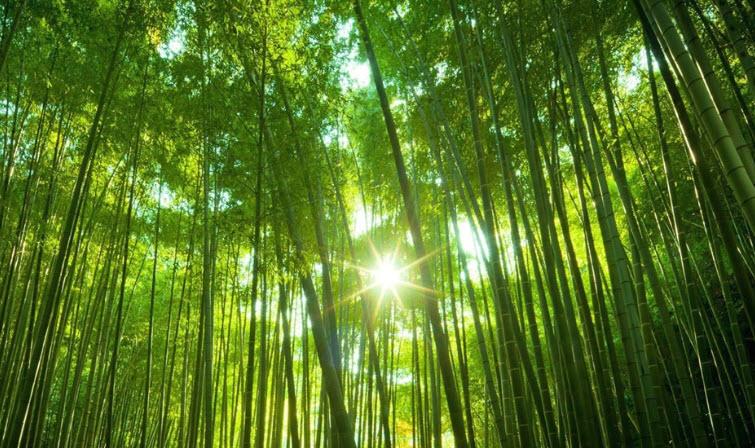 van mau phat bieu cam nghi ve cay tre viet nam Phát biểu cảm nghĩ của em về hình ảnh cây tre Việt Nam