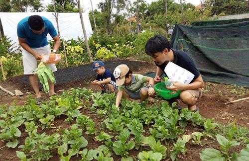 """van mau tu bai lao xao hay ta canh khu vuon vao buoi sang Từ bài """"Lao xao"""" hãy tả lại cảnh khu vườn vào buổi sáng"""