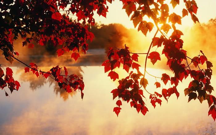 """van mau binh giang bai tho day mua thu toi cua xuan dieu Bình giảng bài thơ """"Đây mùa thu tới"""" của Xuân Diệu"""
