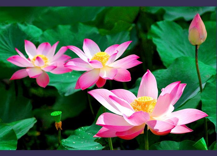 van mau hay ta mot loai hoa ma em yeu thich Hãy tả một loài hoa mà em yêu thích nhất