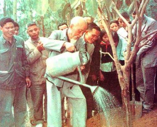 """Suy nghĩ về lời dạy: """"Mùa xuân là tết trồng cây, làm cho đất nước càng ngày càng xuân"""""""