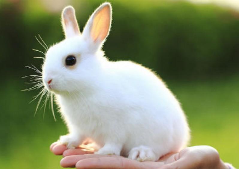 van mau thuyet minh ve con tho Thuyết minh về con thỏ