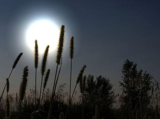 Avatar.phan tich bai tho Anh trang cua Nguyen Duy Tả cảnh đêm trăng mà em cho là thú vị nhất