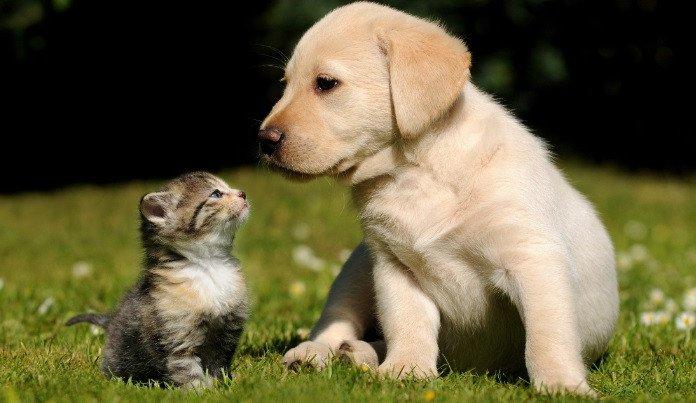 hinh anh ta con cho bai van ta con cho lop 4 hay nhat 2 Kể về một kỉ niệm với con vật nuôi mà em yêu