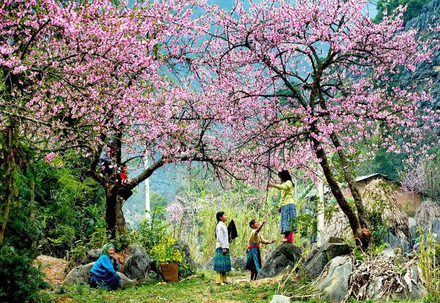 van mau em hay viet mot doan van ngan mieu ta mua xuan Tả mùa xuân lớp 2, bài văn miêu tả mùa xuân trên quê hương em