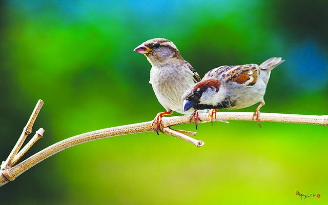 Kể về một loài chim mà em biết